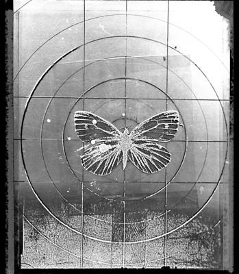 2-1.Butterfly-349x400