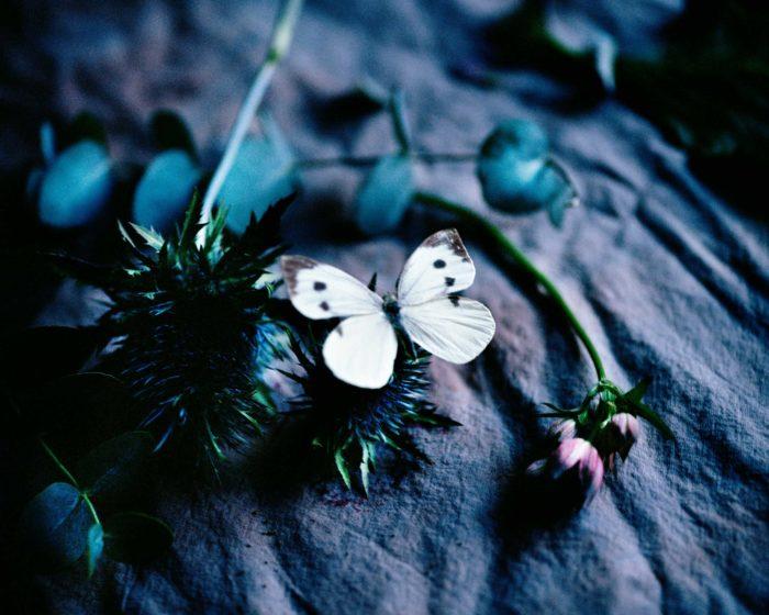 Blue_garden_Ida_Borg_lowres